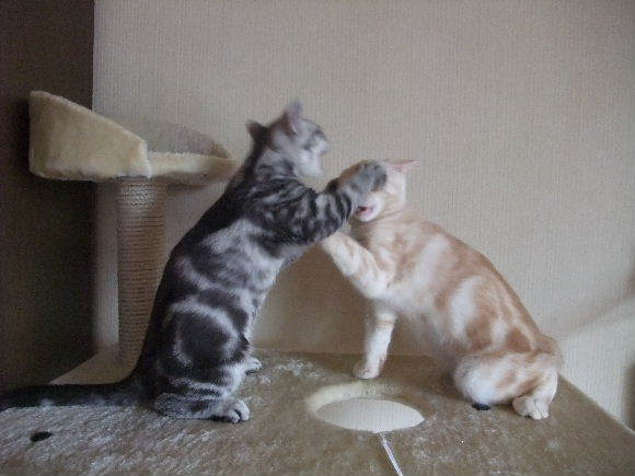 2009_0119圭太2008年12月3日0024.JPG