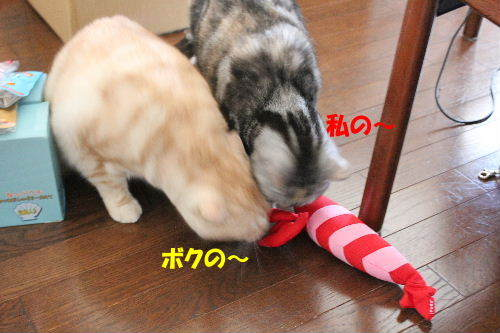 2012年5月エビ3.JPG