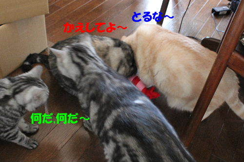 2012年5月エビ3-2.JPG
