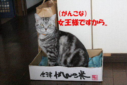 2012年6月アップ5.JPG