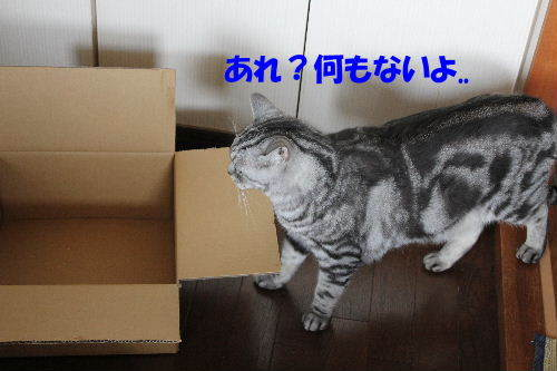 2012年6月モン2-2.JPG