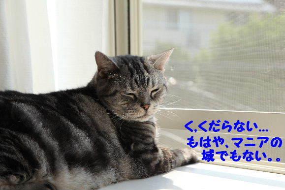 IMG_7368.JPG