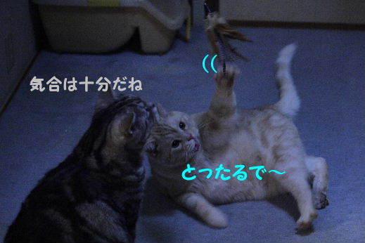IMG_7458.JPG