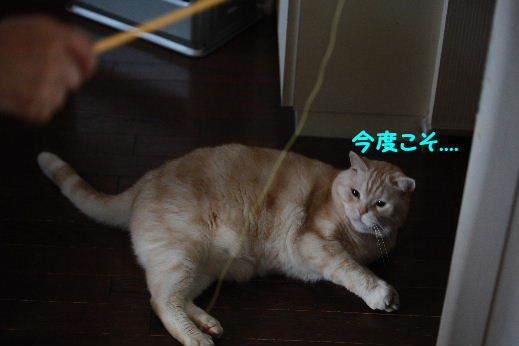 IMG_8524.JPG